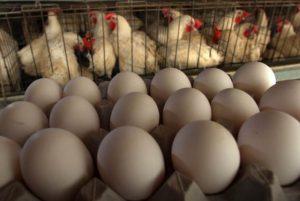 oua neimbogatite cu omega 3