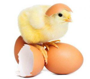 colesterolul din oua