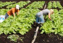 agricultura bio romania