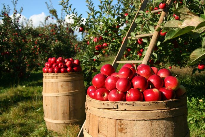 Beneficii produse naturale: merele