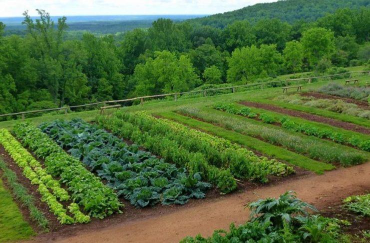 culturi succesive si asociate de legume