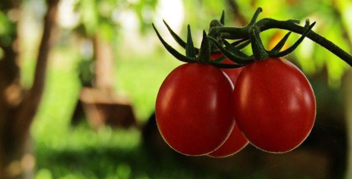 Alimentele organice Produse bio Stiati ca...?