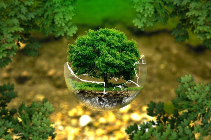 consum responsabil produse eco