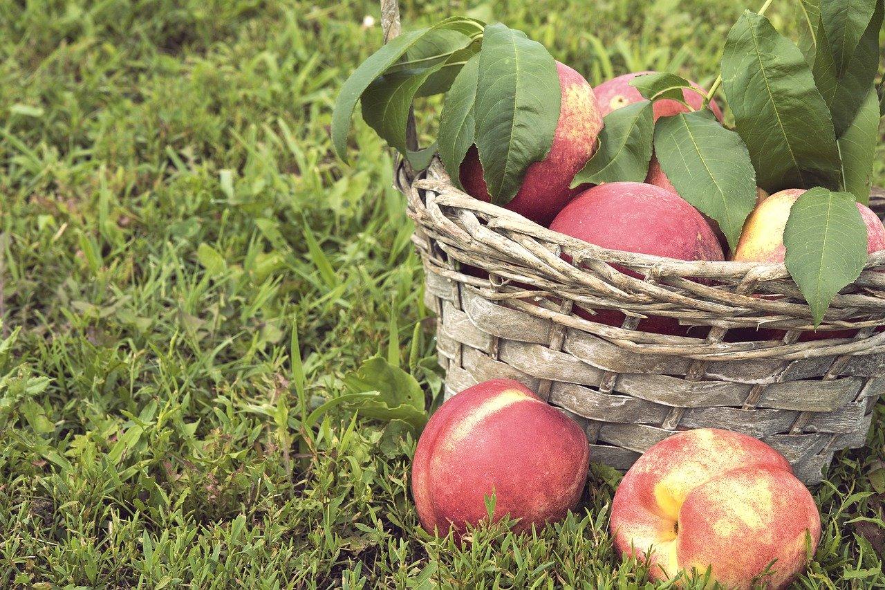 fructe piersici bio